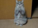 ¡Ay, los gaticos!